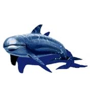 Мозаичное панно дельфин 2